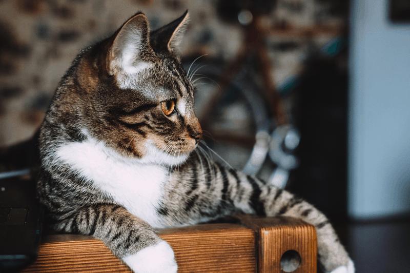 Her er katten der spår og sportsresultater