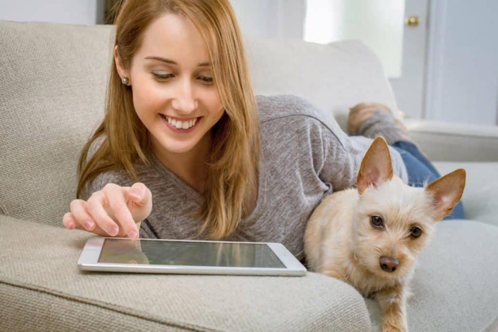 Få det bedste internet til din hundepension